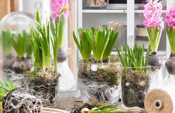 Frühlingspflanzen