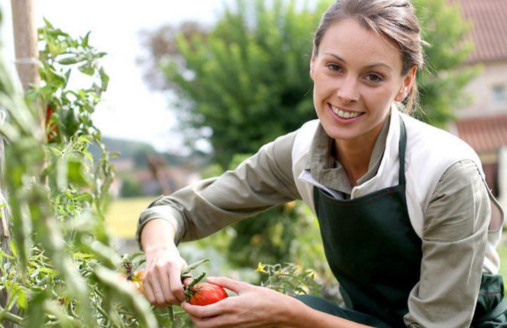 Tomaten Ratgeber